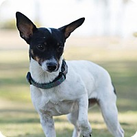 Adopt A Pet :: Penny - Key Largo, FL