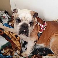 Adopt A Pet :: Walter - Santa Ana, CA