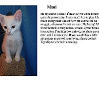 Adopt A Pet :: Maui - Sterling Heights, MI
