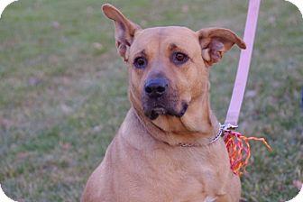 Labrador Retriever Mix Dog for adoption in Elyria, Ohio - Honey-Prison Graduate