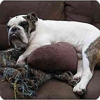 Adopt A Pet :: Duke*adoption pending* - Gilbert, AZ
