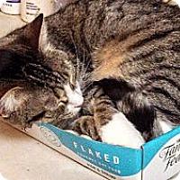 Adopt A Pet :: Vivian-Family cat - Scottsdale, AZ
