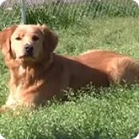 Adopt A Pet :: Cadbury - New Canaan, CT