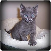Adopt A Pet :: Casey - NEVER A DULL MOMENT!! - South Plainfield, NJ