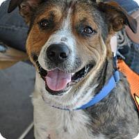 Adopt A Pet :: Astro - Valley Springs, CA