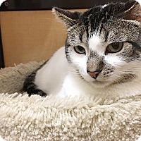 Adopt A Pet :: Trunks - Foothill Ranch, CA