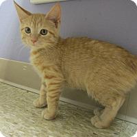 Adopt A Pet :: Colby - Medina, OH