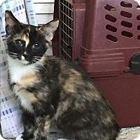 Adopt A Pet :: Sophia - Modesto, CA