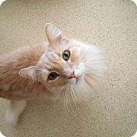 Adopt A Pet :: Leo - Palo Cedro, CA