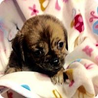 Adopt A Pet :: !4 Spring - Colton, CA