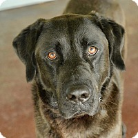 Adopt A Pet :: Farley - San Antonio, TX