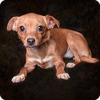 Adopt A Pet :: Mona - Van Nuys, CA