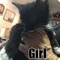 Adopt A Pet :: MITZY - Brea, CA