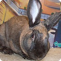 Adopt A Pet :: Miss Molly Brown - Foster, RI