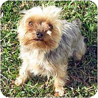 Adopt A Pet :: Little Man - Ft Myers, FL