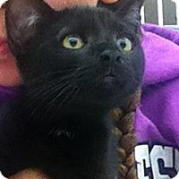 Adopt A Pet :: Spice - Riverhead, NY