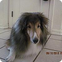 Adopt A Pet :: Max - apache junction, AZ