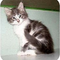 Adopt A Pet :: Hamlet - Shelton, WA