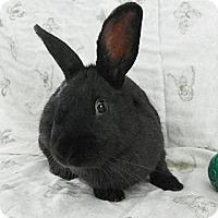 Adopt A Pet :: McGonagall - North Gower, ON