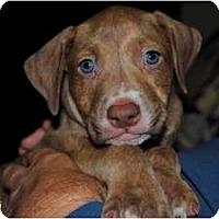 Adopt A Pet :: Clutch - Orlando, FL