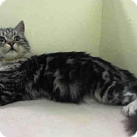 Adopt A Pet :: Dina-Talker - East Hanover, NJ