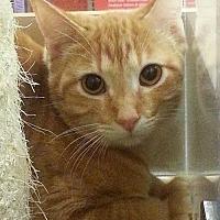 Adopt A Pet :: Elijah - McKinney, TX