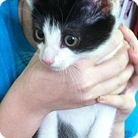 Adopt A Pet :: J.T. - Riverhead, NY