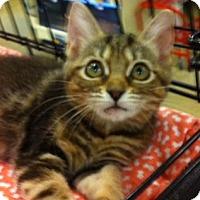 Adopt A Pet :: Tara - Cocoa, FL