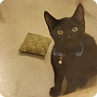 Adopt A Pet :: Tobias - Chicago, IL