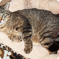 Adopt A Pet :: Kevin - Jackson, MS