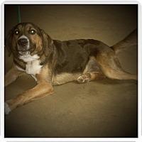 Adopt A Pet :: WINDSOR - Medford, WI