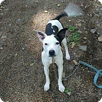 Adopt A Pet :: Abby - Tillamook, OR