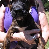 Adopt A Pet :: FRISKY - Brookside, NJ