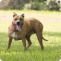 Adopt A Pet :: Binnie Barnes - Vancouver, BC