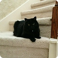 Adopt A Pet :: Sophie - Houston, TX
