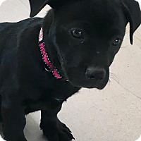 Adopt A Pet :: Baby Sunshine - Rockville, MD