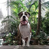 Adopt A Pet :: Nytris - La puente, CA