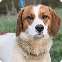 Adopt A Pet :: Luke (Neutered) - Marietta, OH