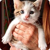 Adopt A Pet :: Gianna - Island Park, NY