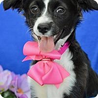 Adopt A Pet :: Rosemary - Irvine, CA