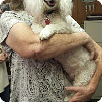 Adopt A Pet :: Lola - Livingston, TX
