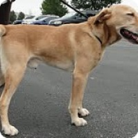 Adopt A Pet :: Hobbs - Lewisville, IN