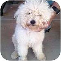 Adopt A Pet :: OZZIE - Gilbert, AZ