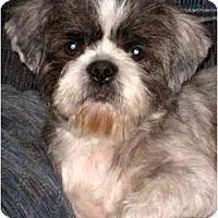 Adopt A Pet :: Corky - Mays Landing, NJ