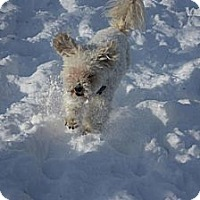 Adopt A Pet :: Elen - Hastings, NY