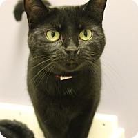 Adopt A Pet :: Lee - Medina, OH