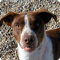Adopt A Pet :: Lulu - Wickenburg, AZ