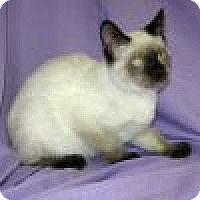 Adopt A Pet :: Kipling - Powell, OH