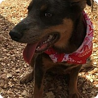 Husky/Shepherd (Unknown Type) Mix Puppy for adoption in Cranston, Rhode Island - HAILEY