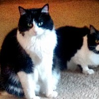 Adopt A Pet :: Tooey and Wunnie - Springfield, OR